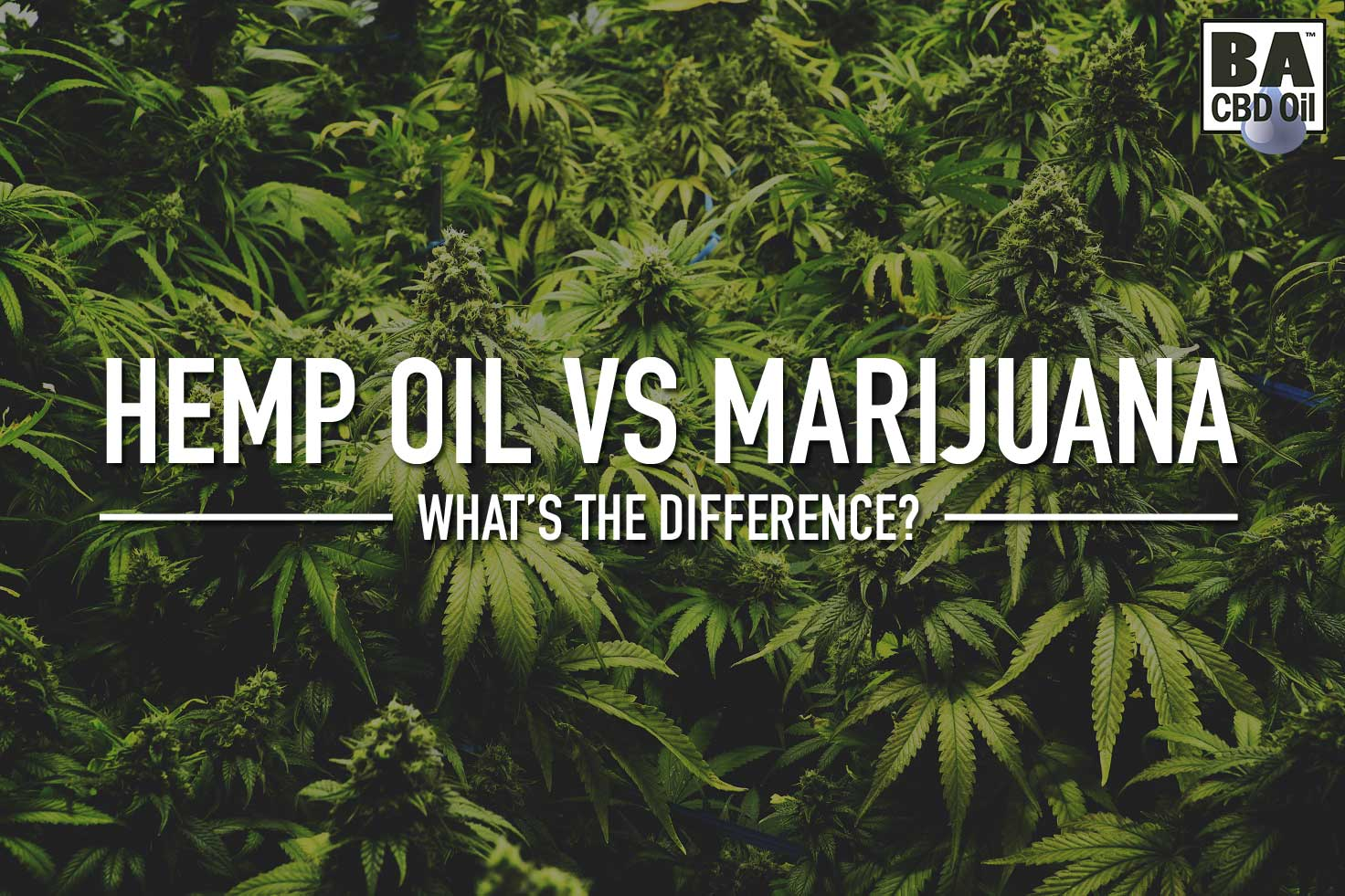 hemp oil vs marijuana