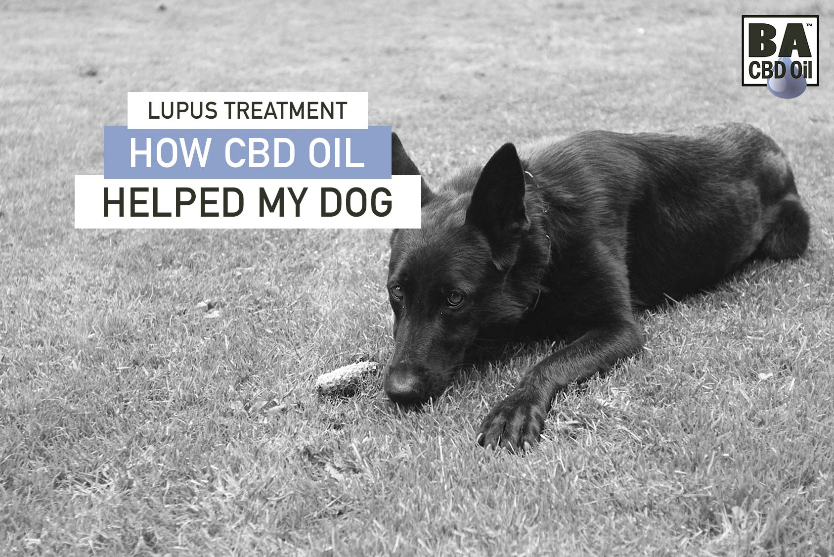 Lupus Treatment